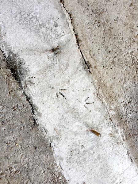 02_鳥の足跡
